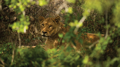 Kruger-National-Park-Big-5-tour