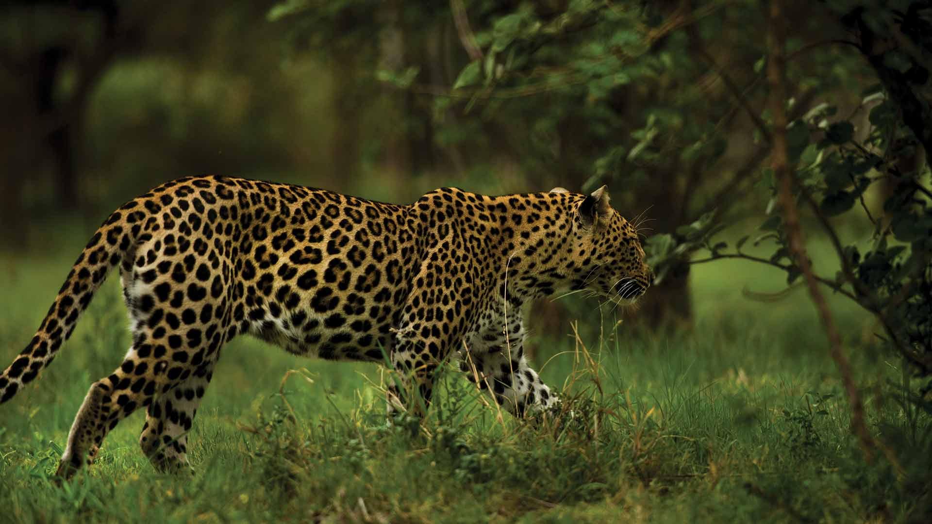 YGo-Game-Drive-Safaris
