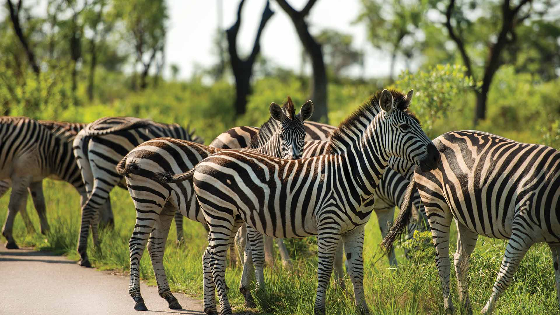 YGo-Kruger-National-Park-Safaris