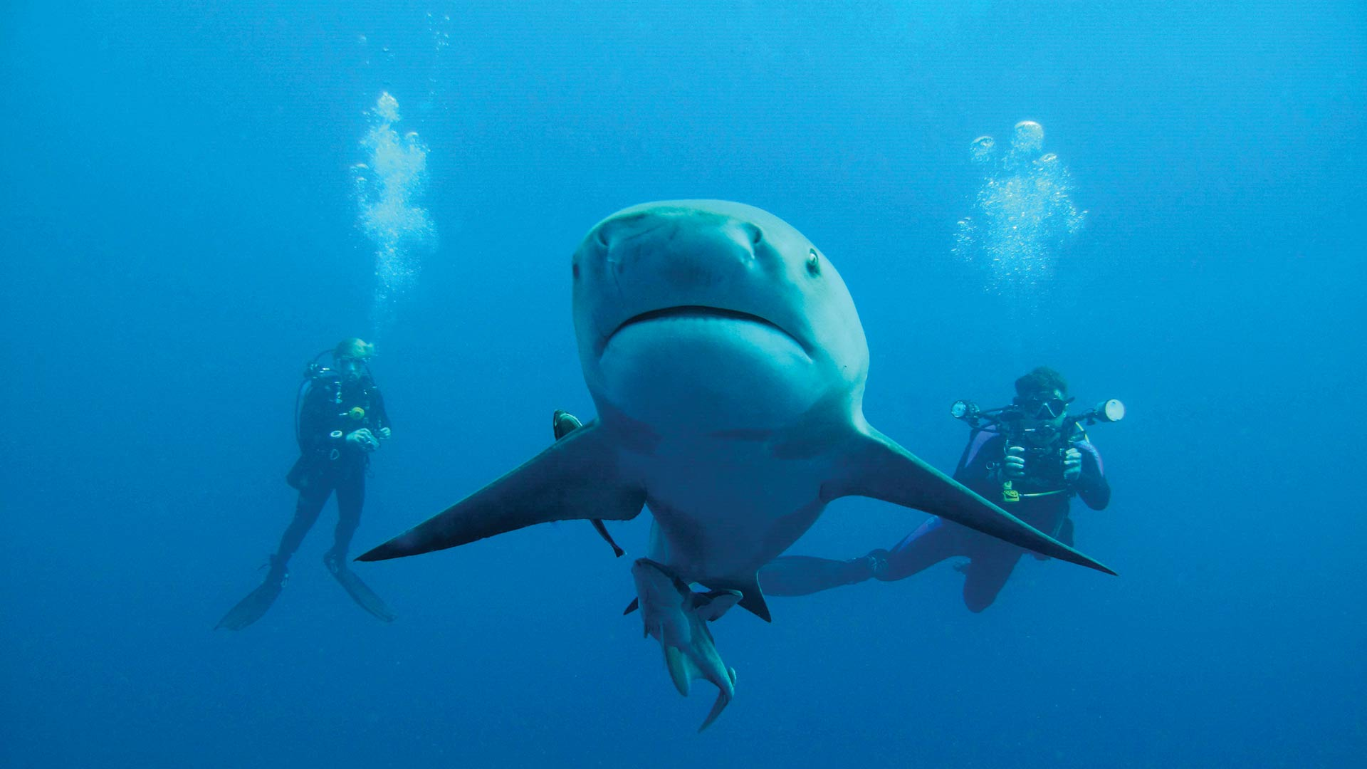 YGo-Protea-Banks-Shark-Diving